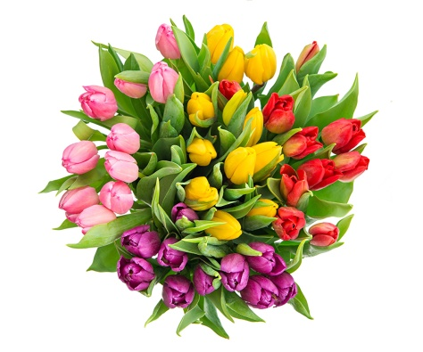 Bouquets_Tulips_White_501284